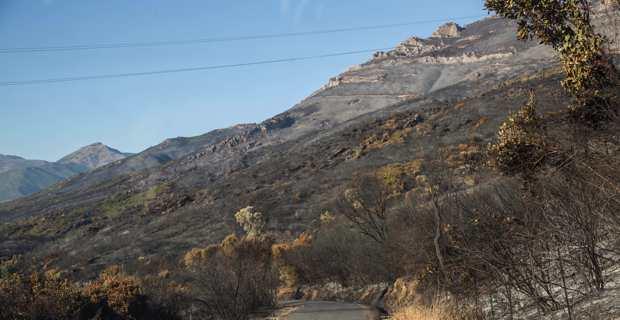 """Après les incendies : La chambre d'agriculture de Corse évite """"la double peine"""" aux agriculteurs"""