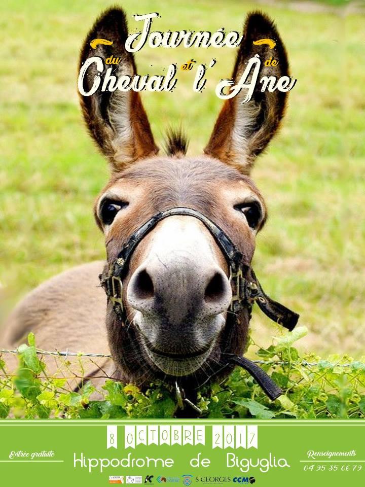 La Journée du cheval et de l'âne à l'hippodrome de Casatorra