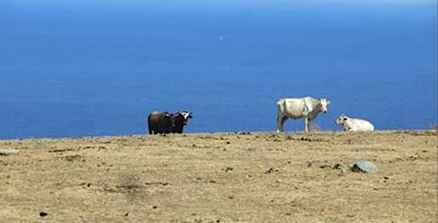 Joseph Colombani : « La sécheresse, que connaît la Corse aujourd'hui, devient un fait de société ».