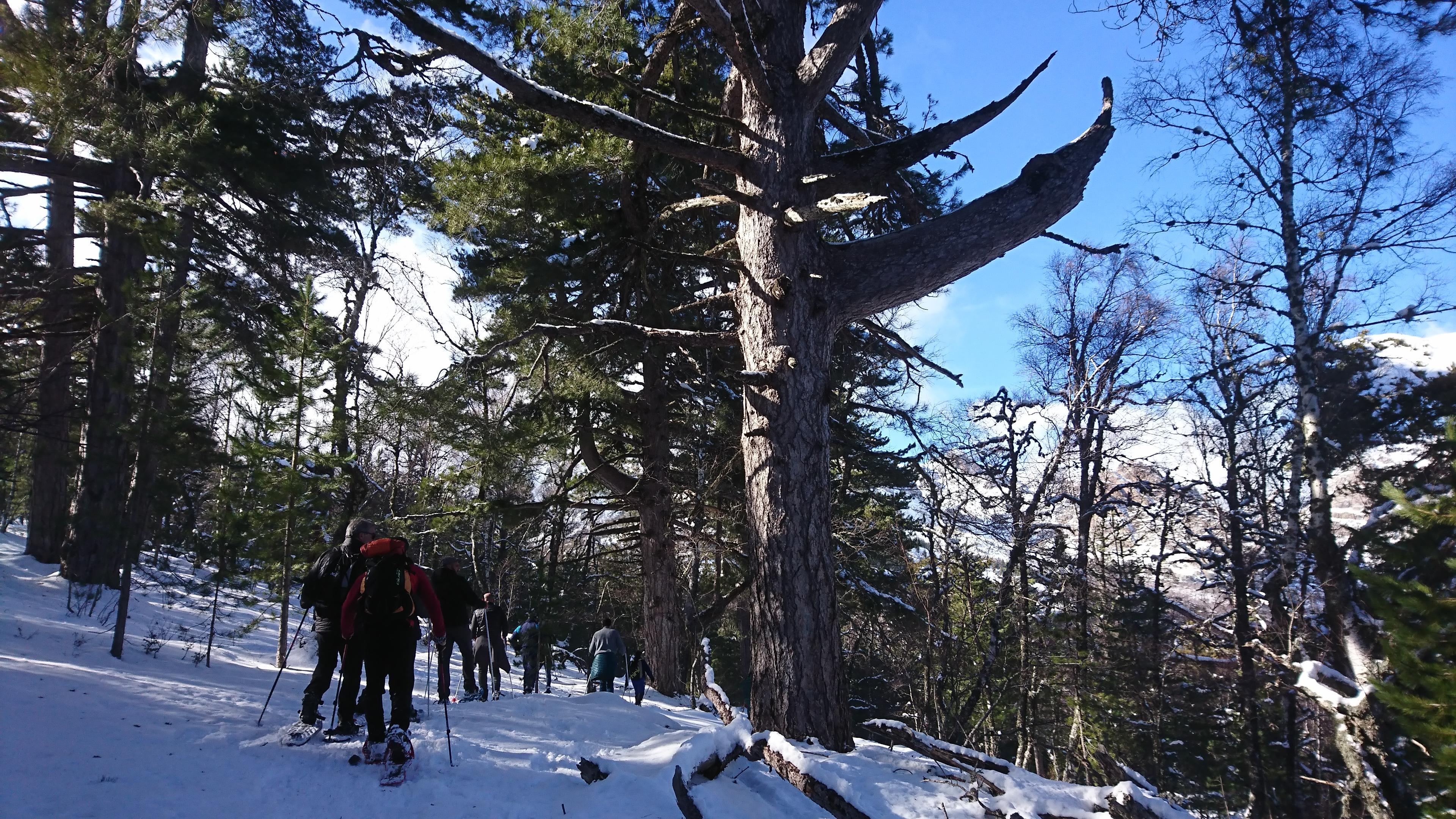 Neige : les Hivernales font le plein au col de Verghju
