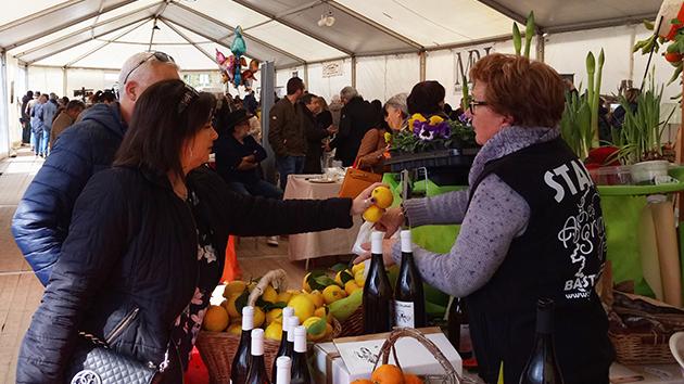 Bastelicaccia : La fête des agrumes au bon goût pulpé de la tradition