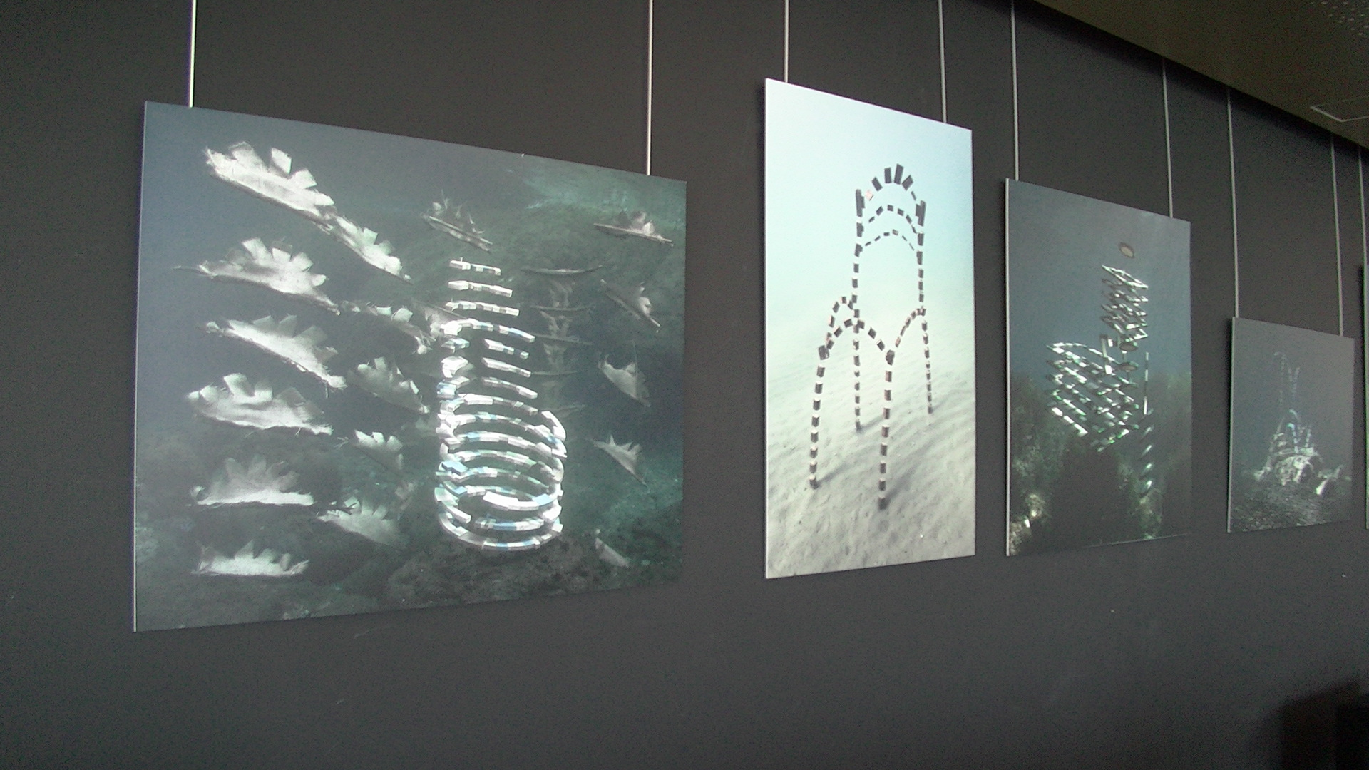 Bastia: La mer et ses dessous en exposition à L'Alb'Oru
