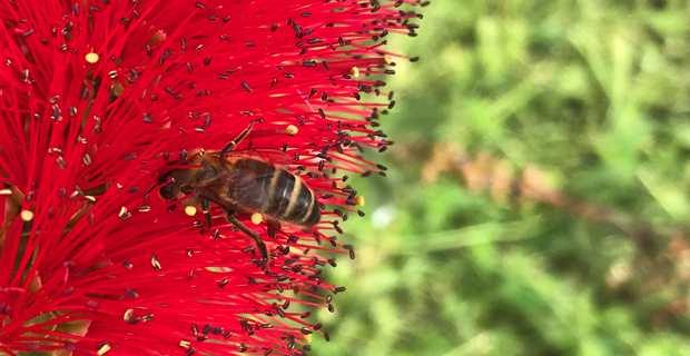 20 mai : Une journée mondiale d'action pour sauver les abeilles et l'humanité !