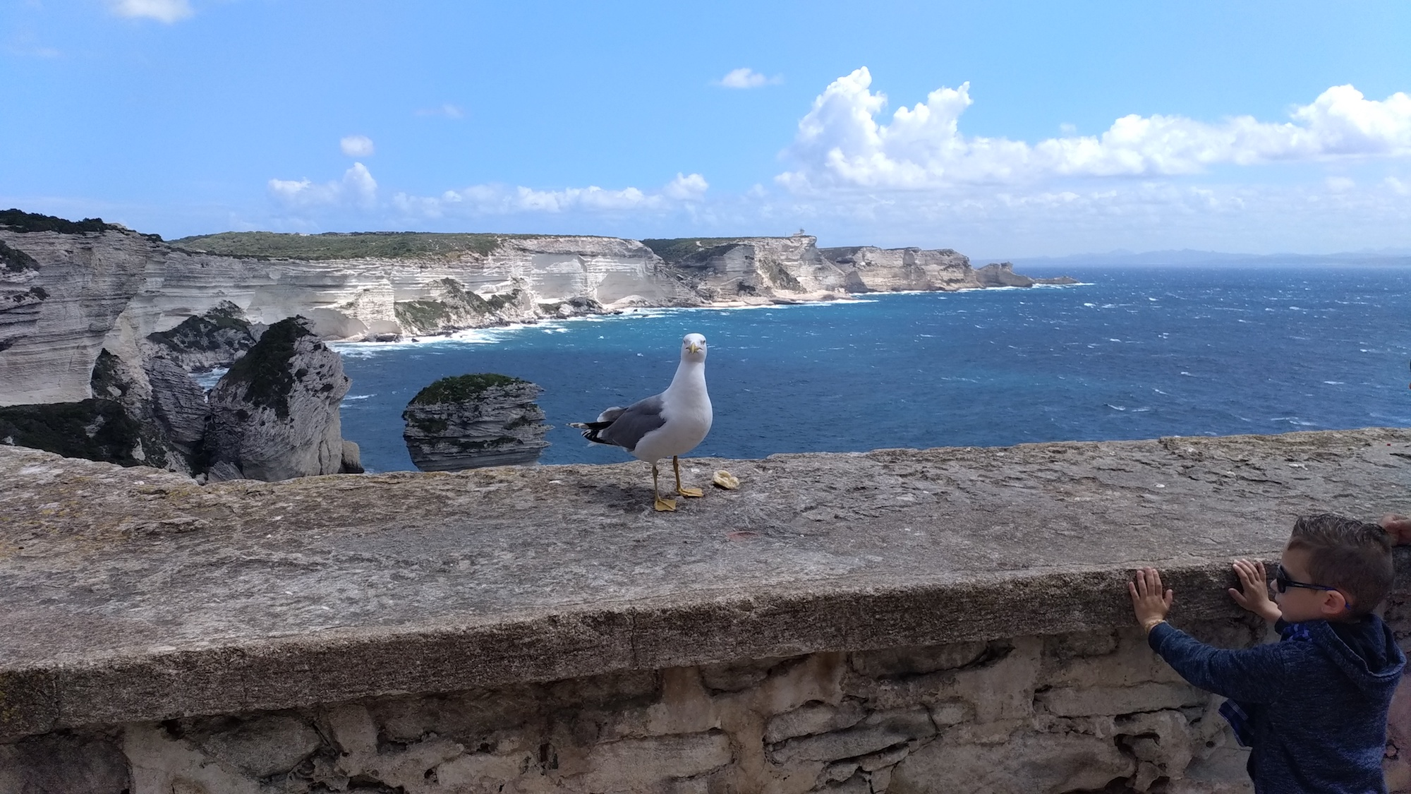 La photo du jour : L'oiseau et l'enfant de Bonifacio