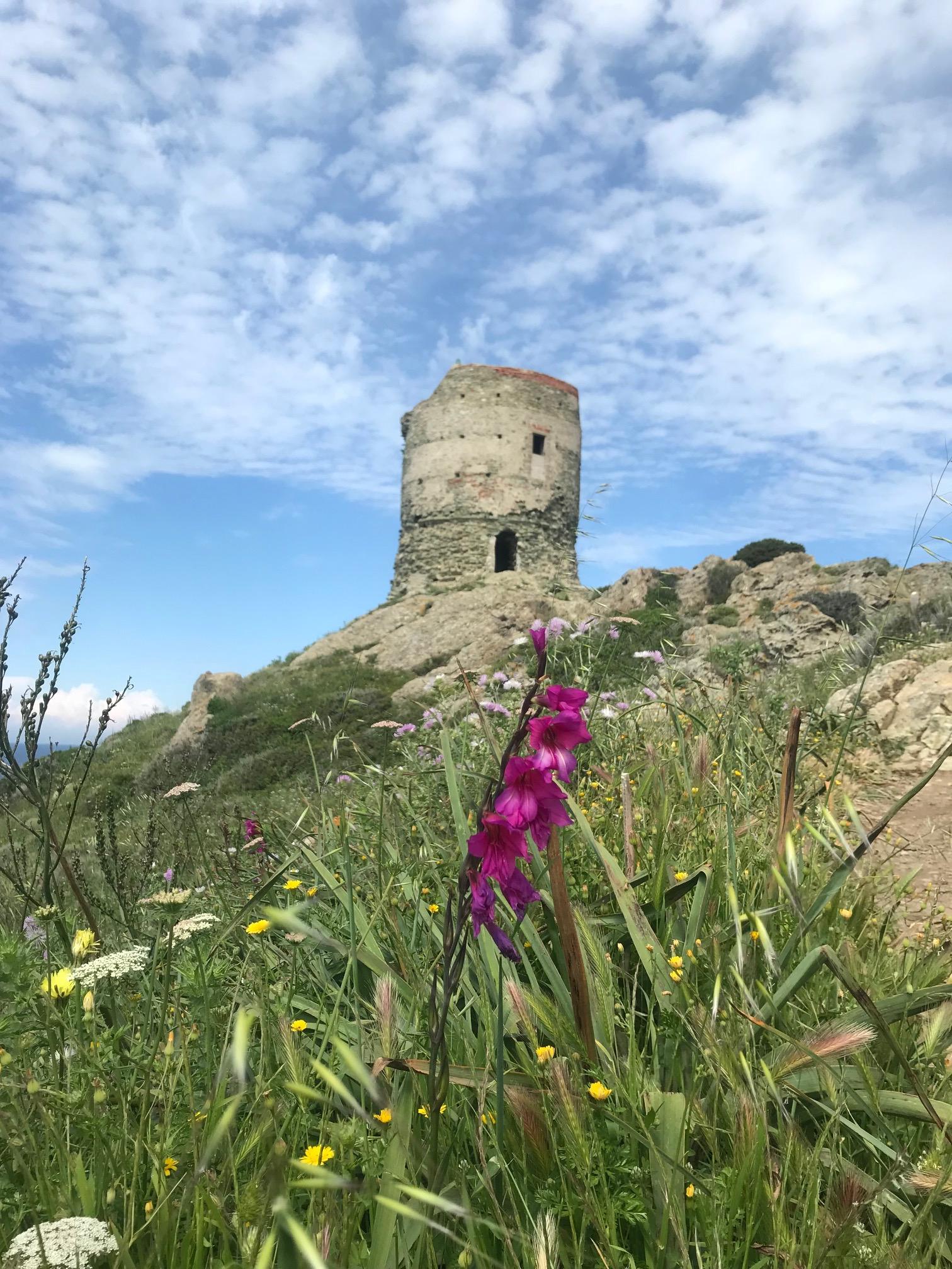 La photo du jour :  La tour d'Agnellu dans un maquis en fleurs