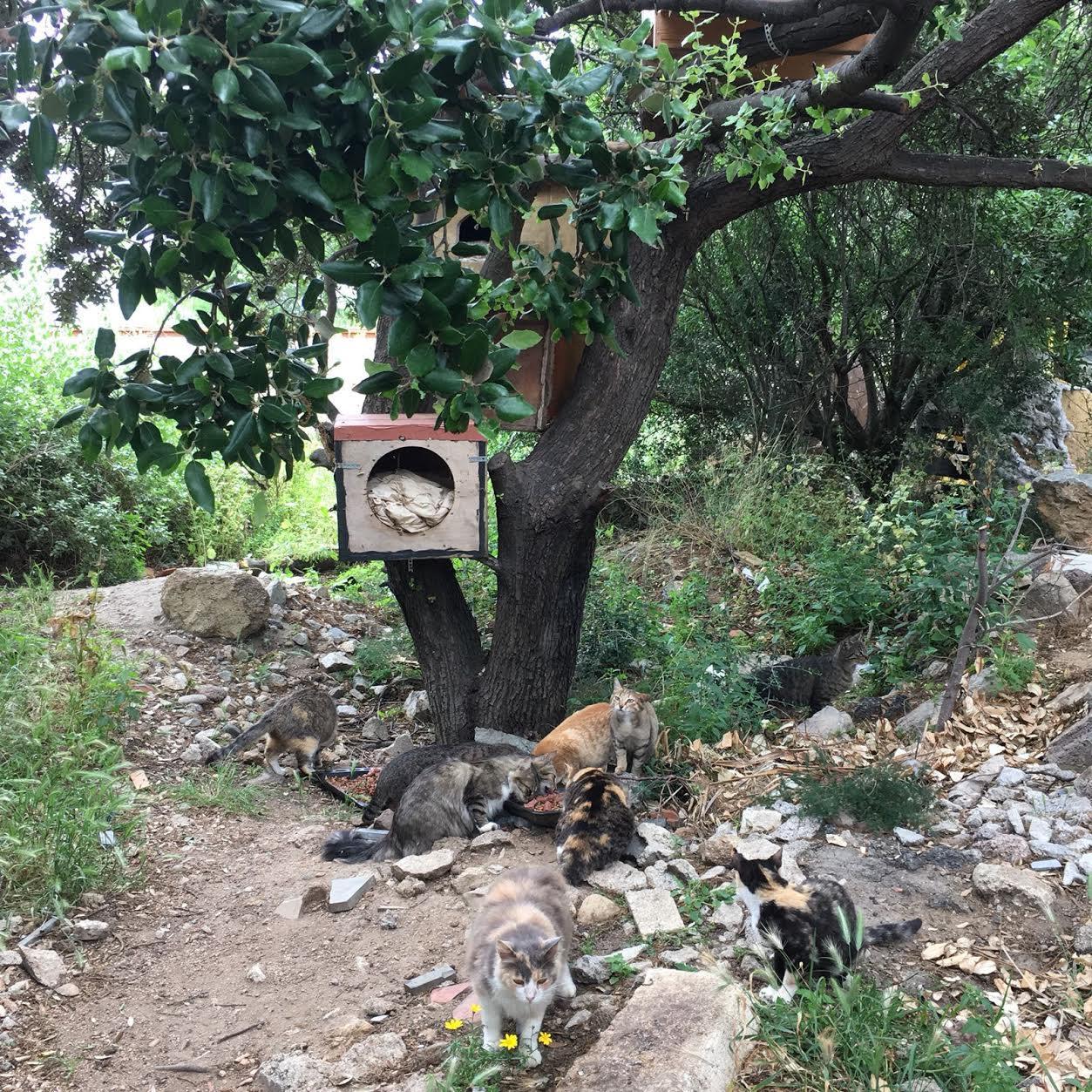 Boulettes empoisonnées retrouvées à Lisula et Santa-Reparata-di-Balagna