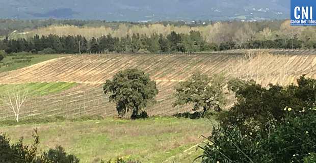 Linguizzetta : La situation du Domaine de Casabianca inquiète…