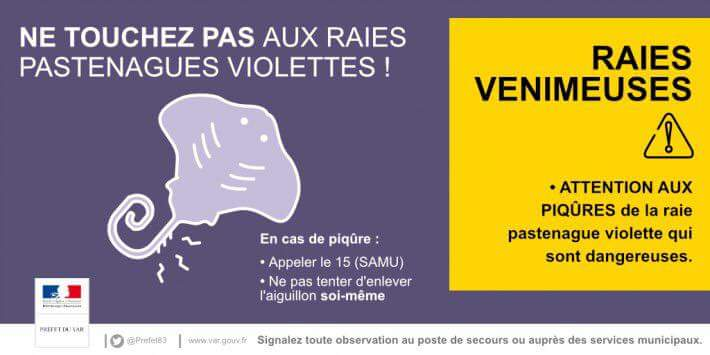 Attention aux raies pastenagues violettes entre le Valinco et la rive Sud d'Ajaccio
