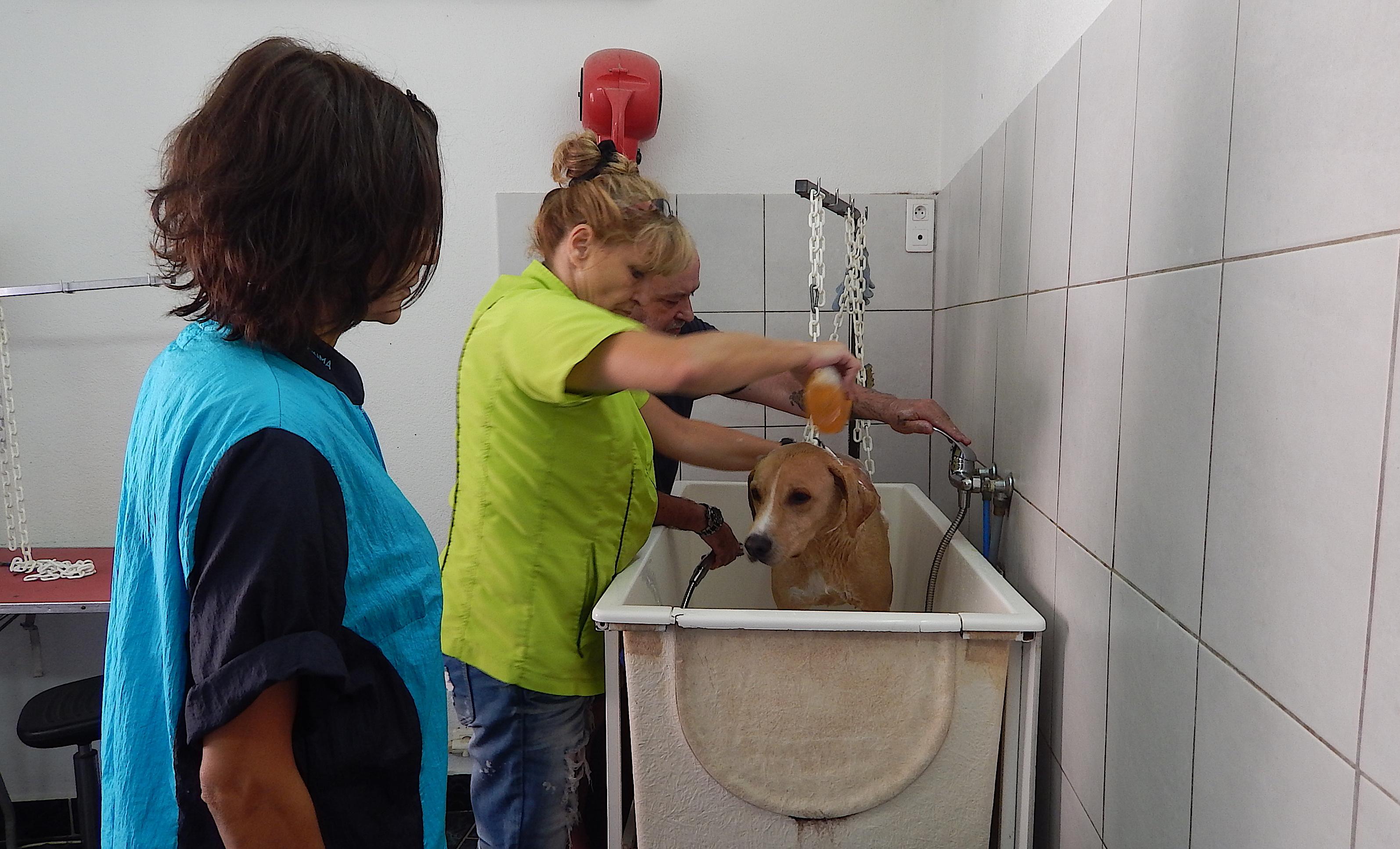Porto-Vecchio : Après la plage, le salon de toilettage