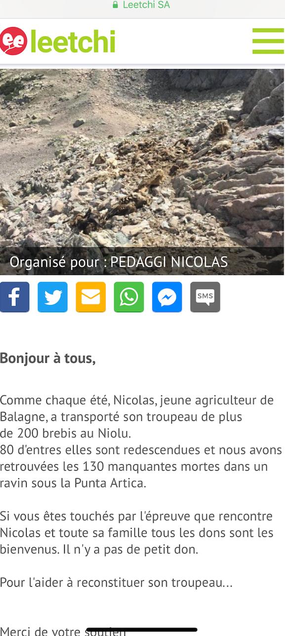 Une cagnotte en ligne pour reconstituer un troupeau de brebis en partie foudroyé dans le Niolu