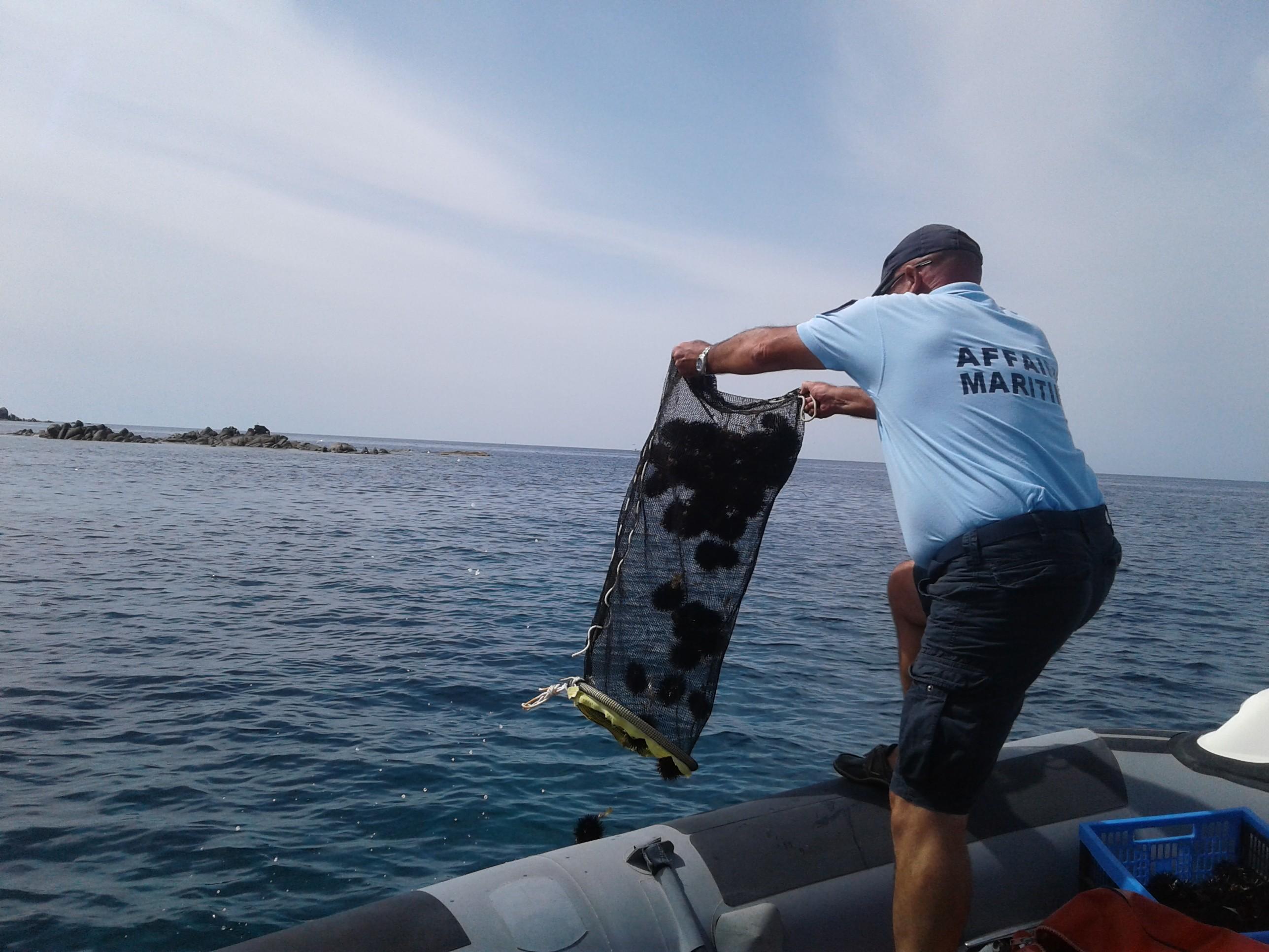 Les oursins pêchés illégalement rejetés à la mer