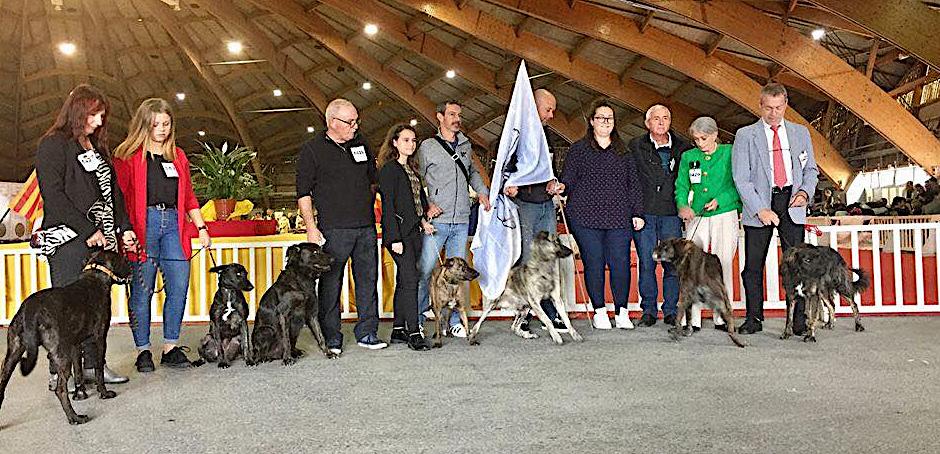 *Le Cursinu a été mis à l'honneur à l'exposition canine d'Avignon