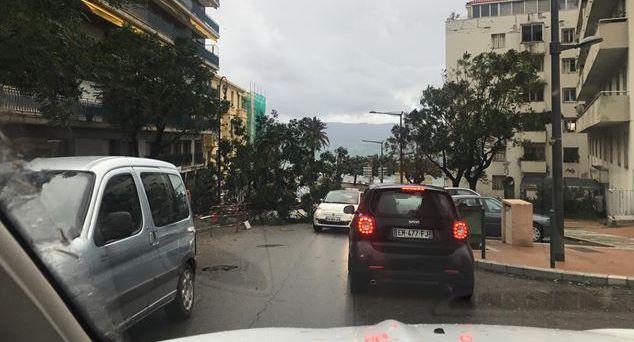 Boulevard Madame Mère à Ajaccio : Un arbre sur la chausée. (Tini Pérez-Guill)