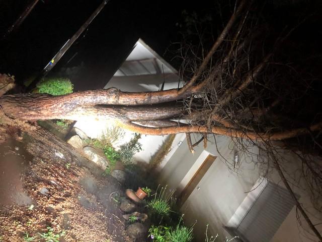 Un arbre s'est couché sur le toit d'une maison route de l'aéroport à Calvi
