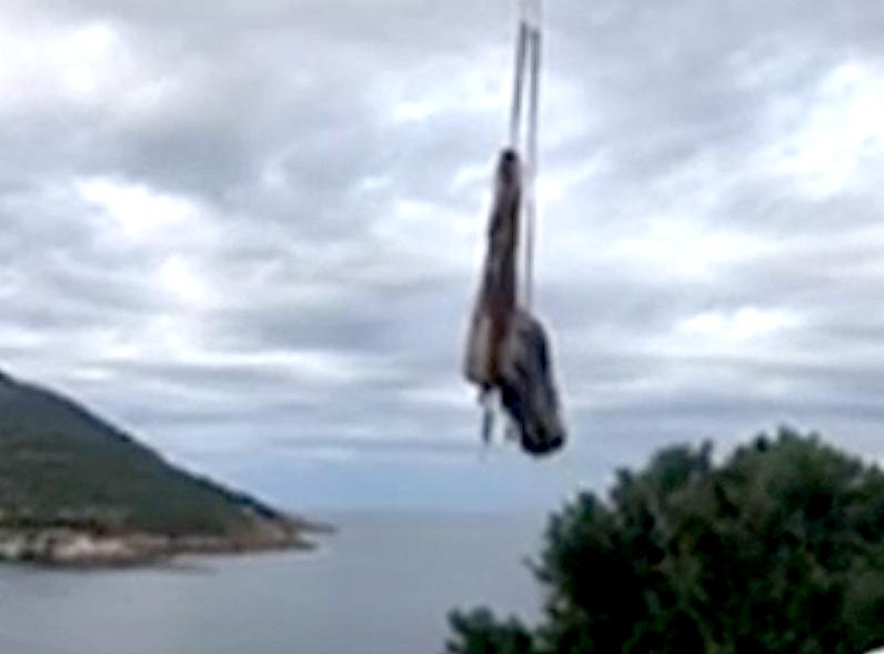 Galeria : La carcasse du cachalot échoué lundi a été retirée