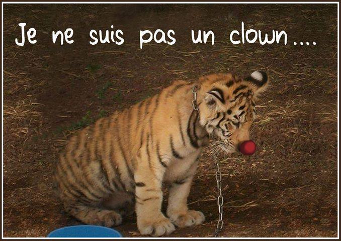 """Le collectif """"La Corse dit Stop aux cirques avec animaux"""" manifeste et se félicite…"""