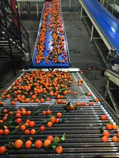 François-Xavier Ceccoli : « L'image de la Corse en matière de produits alimentaires est très bonne »