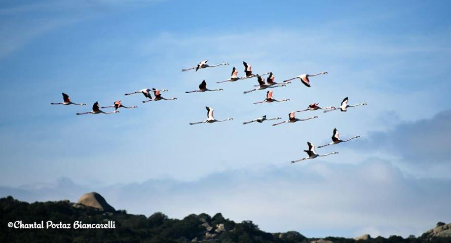 La photo du jour : Les flamants roses de retour à Santa Ghjulia