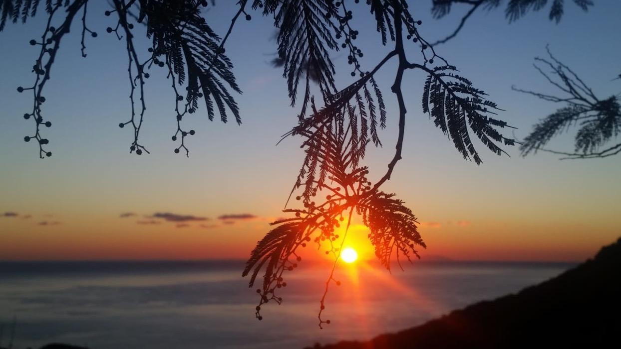 La photo du jour : Le Soleil comme un grain de mimosa