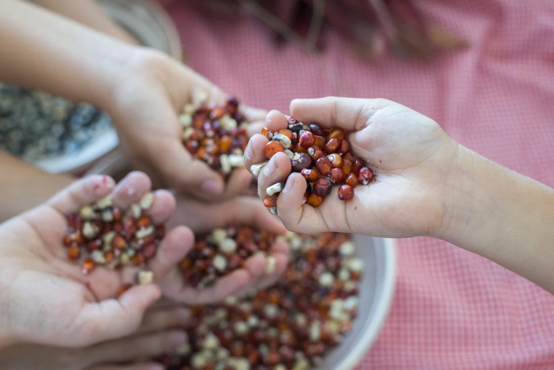 A Lucciana des conférences sur le thèmes du foncier et l'échange de graines