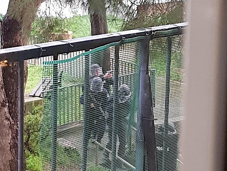 Les policiers en arme au pied de l'immeuble (Photos O. Baldocchi)