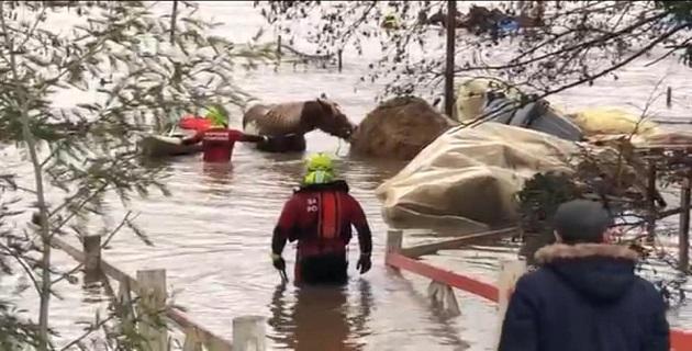 Une importante crue de la Gravona piège une cinquantaine de chevaux / Photos Leandri