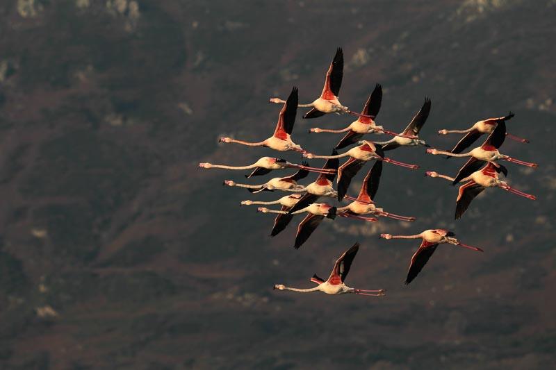 Photous Oiseaux de Corse