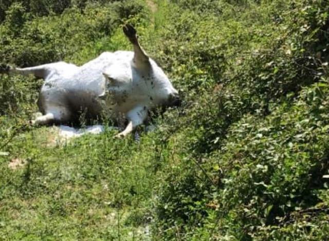 Maltraitance animale : Des cas supposés en Corse