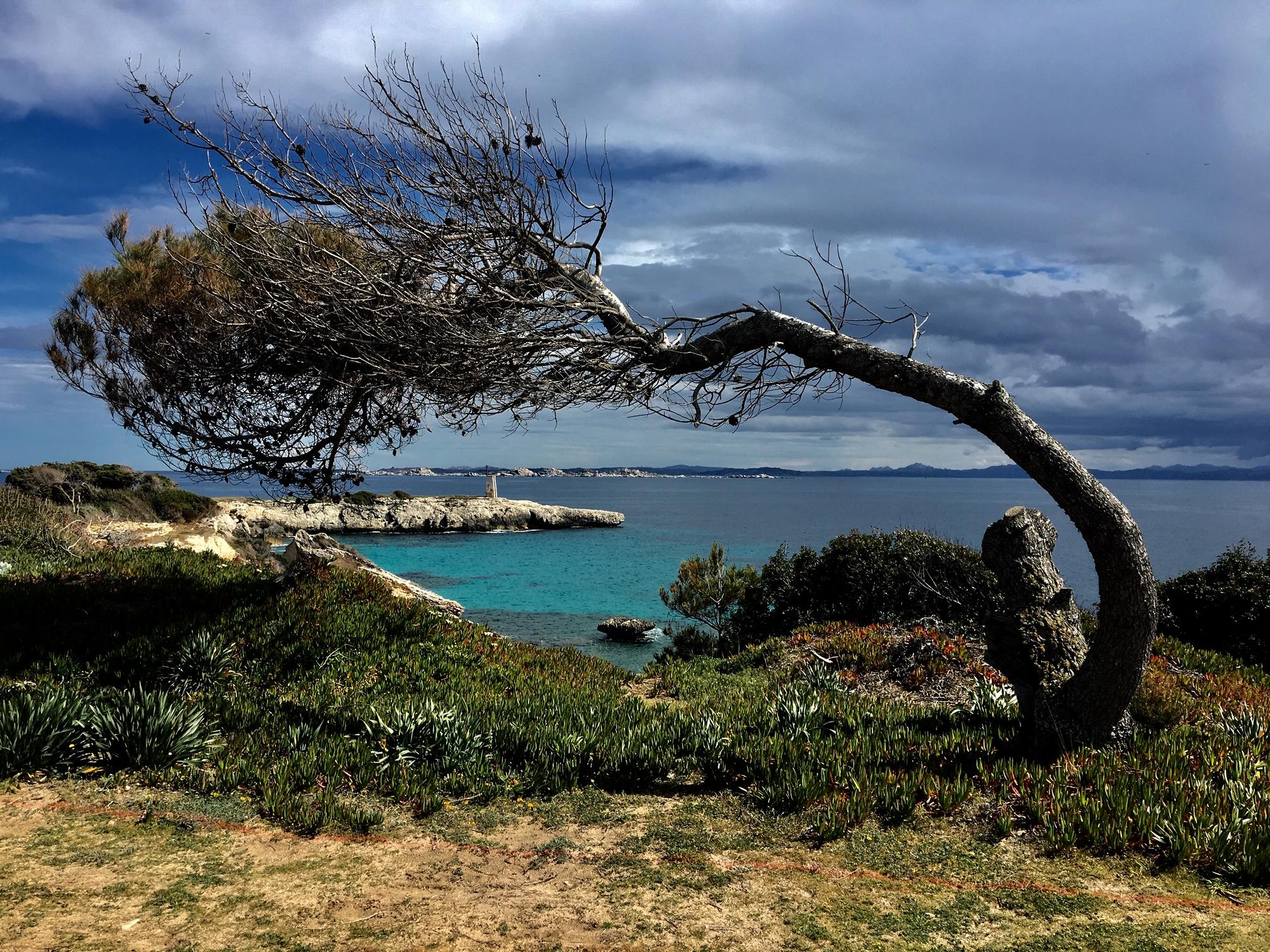 La photo du jour : L'arbre couché (par les vents) de Sperone