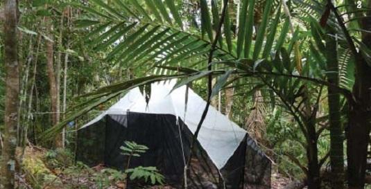 Des pièges à insectes vont être installés dans les forêts de l'Alta Rocca