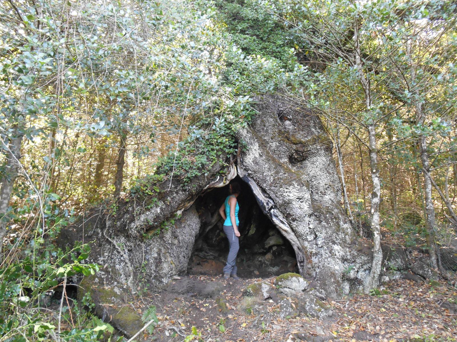 A la découverte des chênes remarquables d'Argiusta-Moriccio