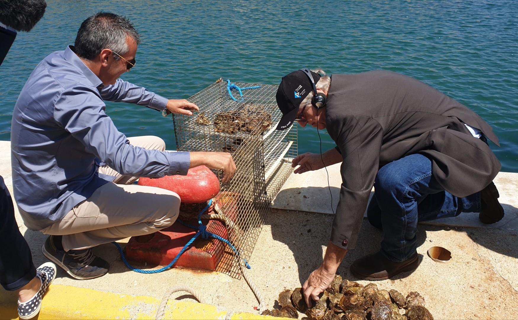 Huitres et oursins : Le projet de Stella Mare au service de la bioéconomie marine