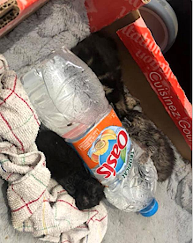 Furiani : Trois chatons dans un sachet plastique jeté dans une poubelle