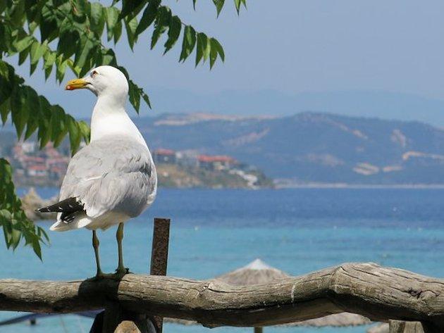 Bastia : Les pompiers au secours du perroquet !
