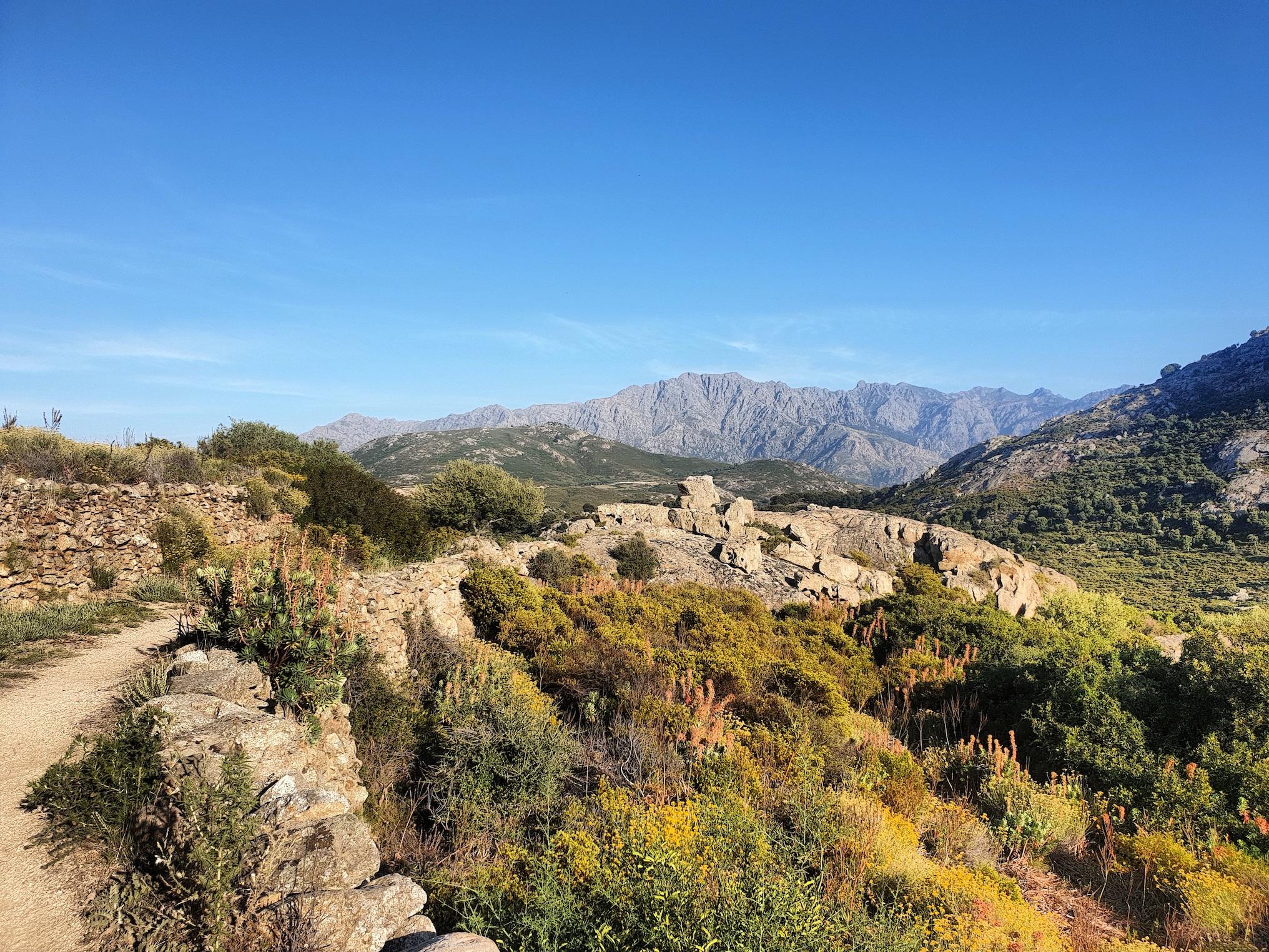 Le Montegrossu sur les sentiers du village abandonné de Occi près de Lumio (Eric Frulani)
