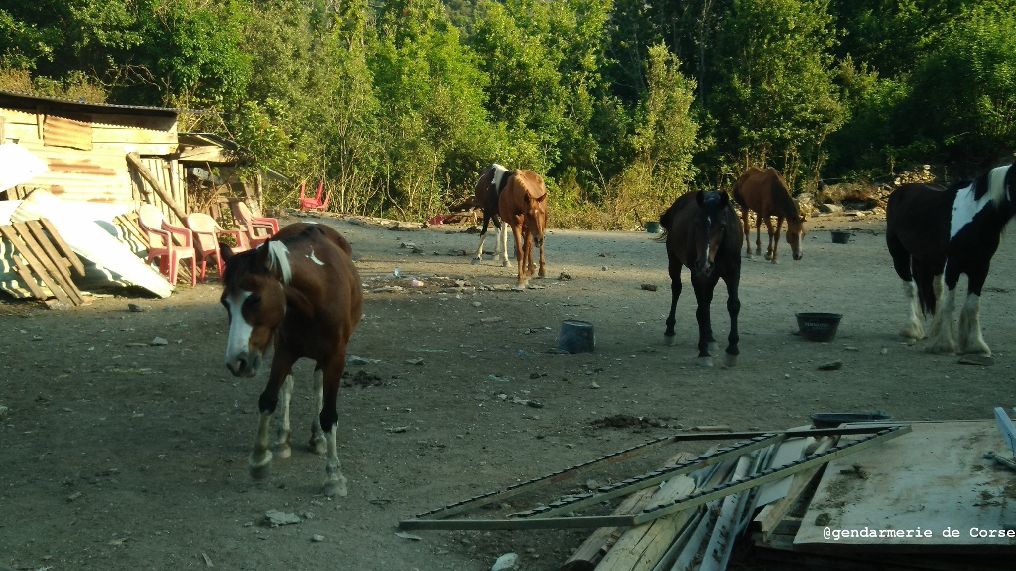 Deux chevaux morts et 10 en piteux état dans une pension équine de Haute-Corse
