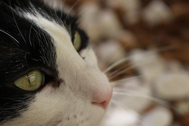 Les insolites de l'été : installée à Calenzana elle va récupérer dans la Drôme sa chatte Chanel, perdue un mois plus tôt