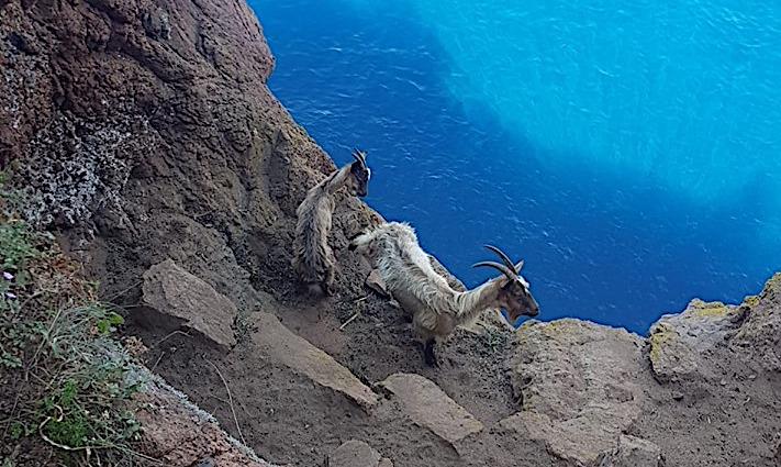 Scandola : Les pompiers du groupe montagne au secours de deux chèvres