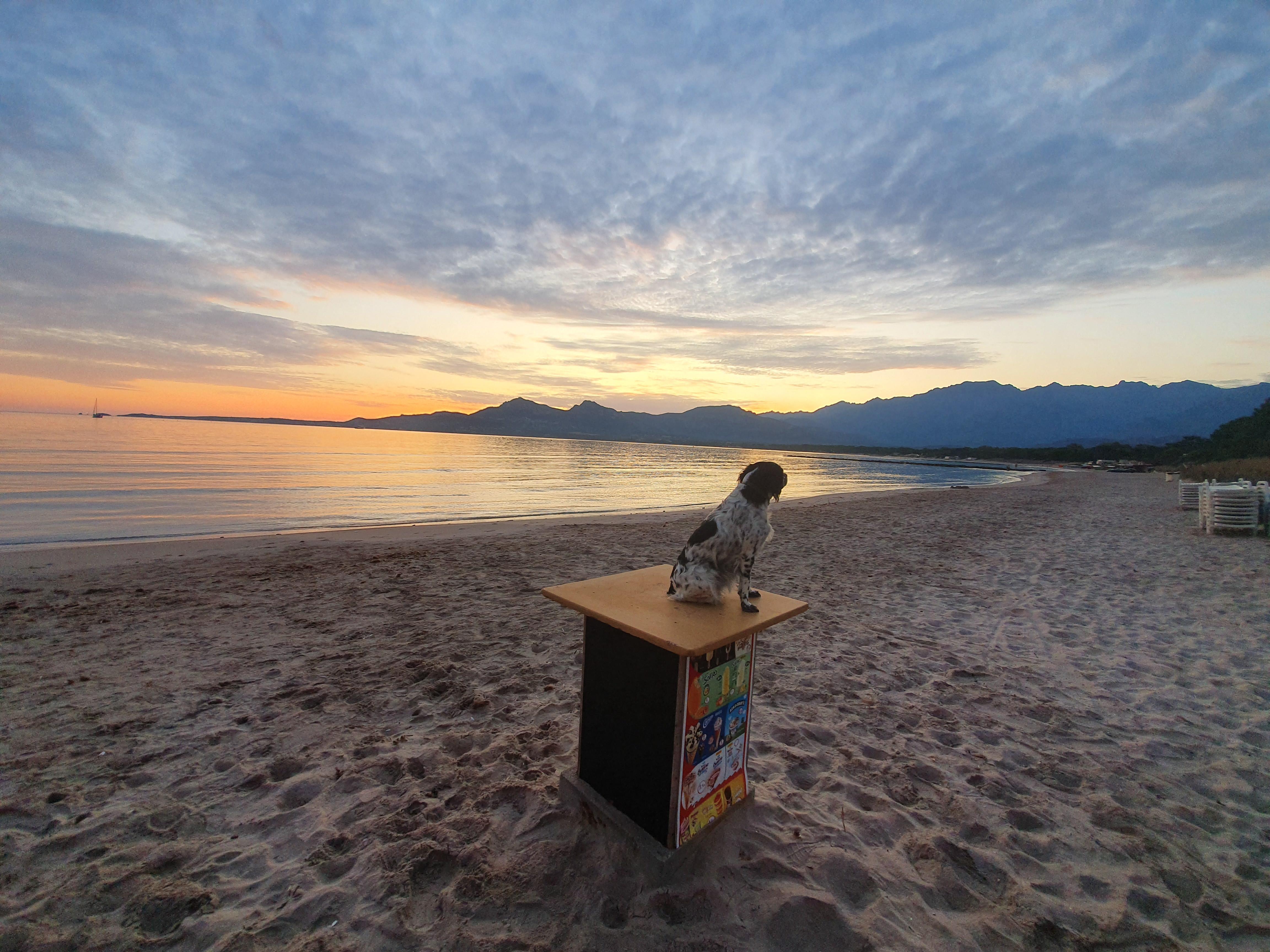 La photo du jour : lorsque le Soleil se lève sur la plage de Calvi