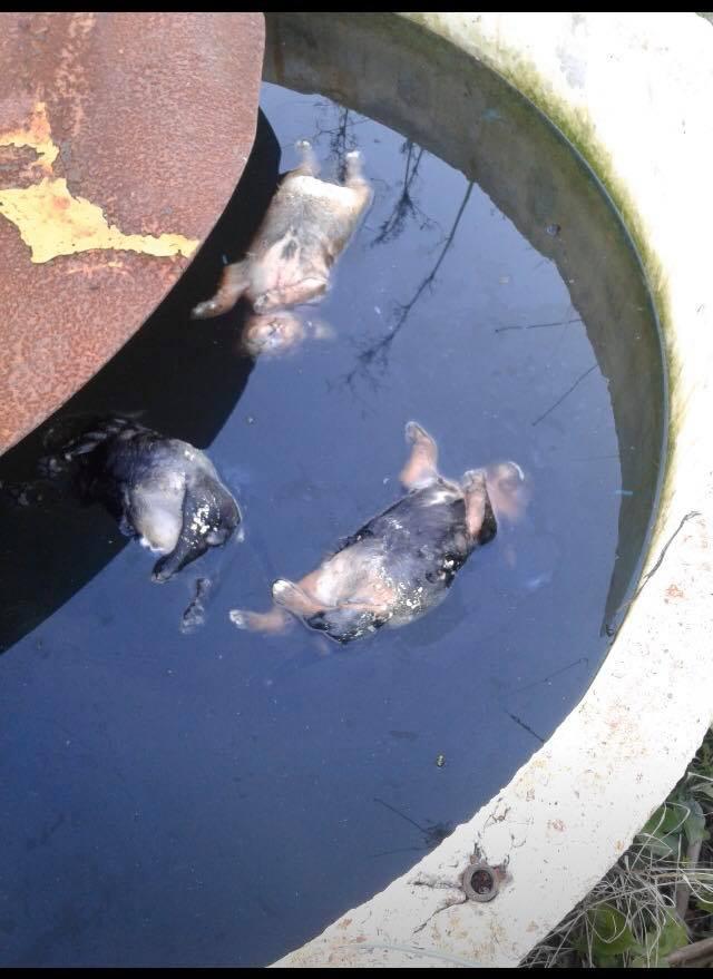 Ajaccio : des chiots noyés dans une cuve au Vazzio