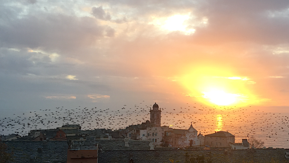 La photo du jour : nuée d'étourneaux sur Bastia