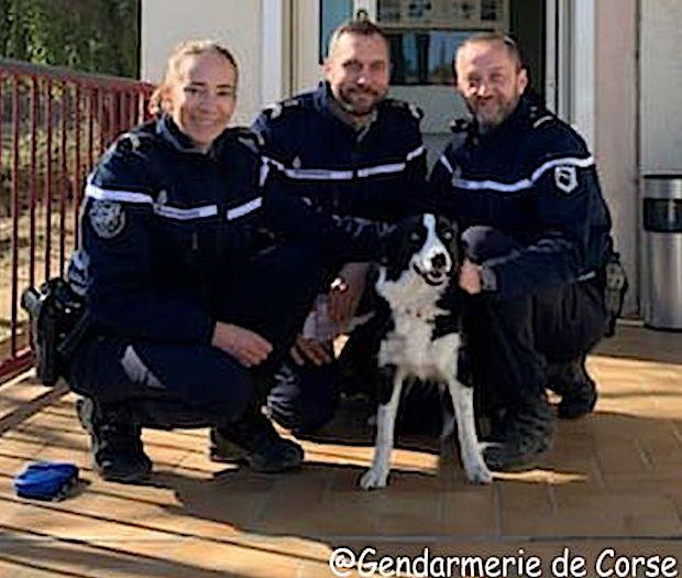 """Corbara : les gendarmes recueillent """"Chipie"""""""