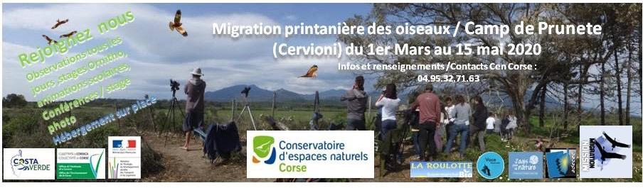 A Cervioni pour découvrir la migration printanière des oiseaux