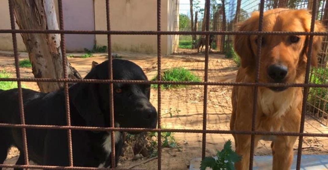 Léo (noir) et Balvi (marron) sont à l'adoption
