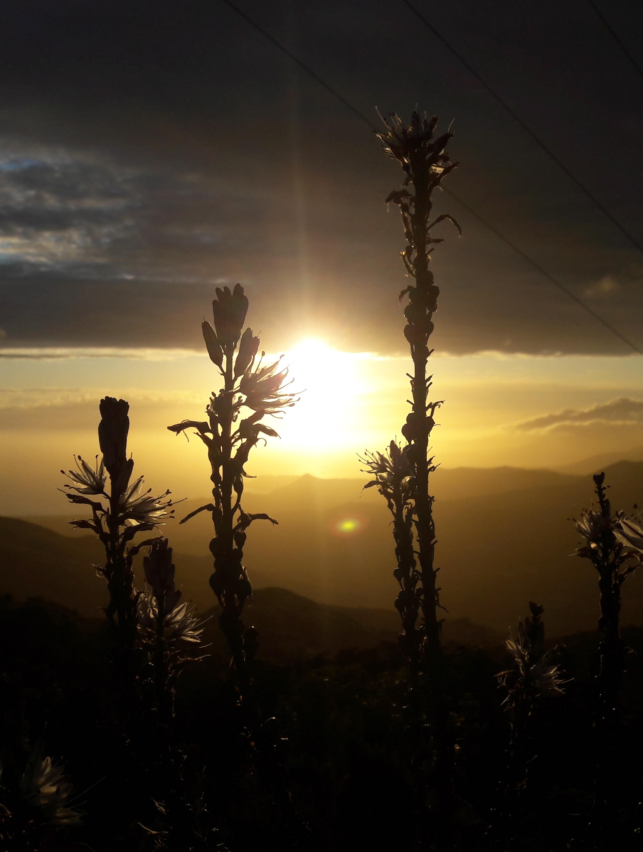 Le soleil se couche à travers les talavedde... (Photo Charlotte Lugrezi)