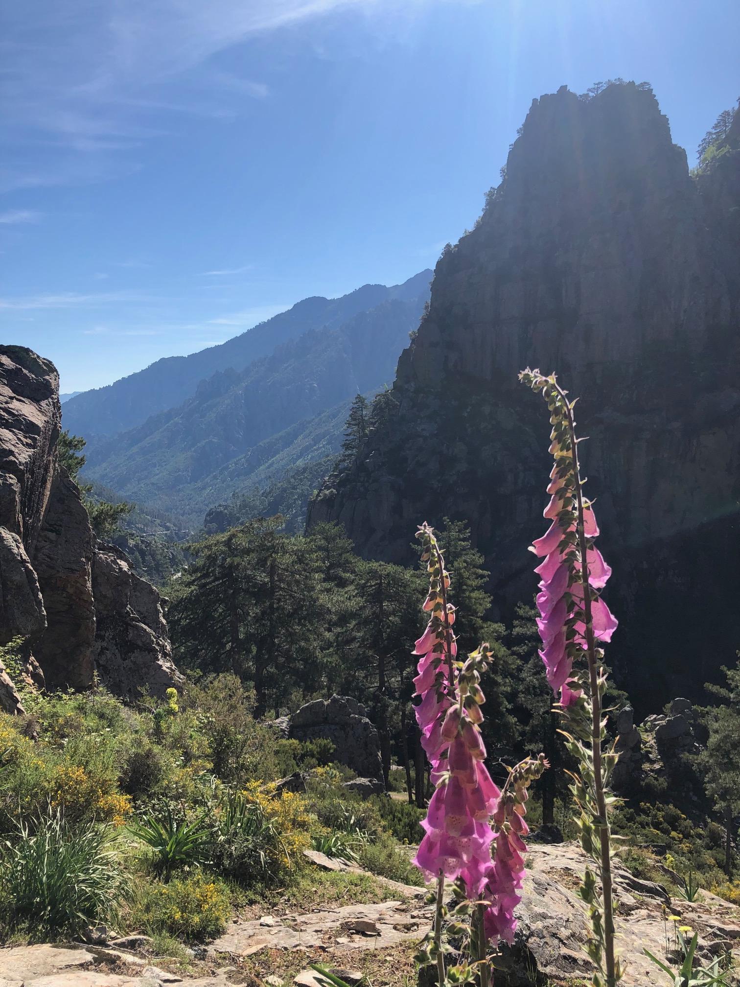 La photo du jour : la vallée de la Restonica