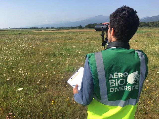 Aéro biodiversité étudie aussi bien faune que flore sur les aeroports, ici à Poretta (copyright : r.seitre@aerobiodiversite.org