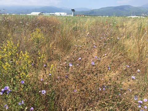 La biodiversité à l'aéroport de Bastia-Poretta. (copyright : r.seitre@aerobiodiversite.org)