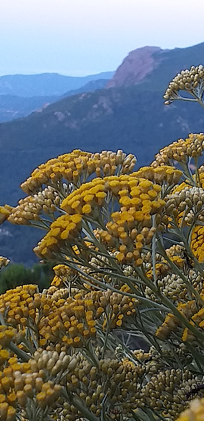 La photo du jour : a Muredda è u monte Gozzi