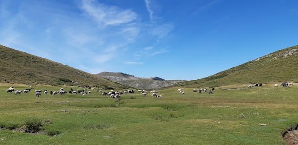 Plateau du Cuscionu.